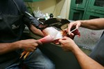 A wounded Rooster has the blood washed from his wounds after a battle during Cockfighting night at Club Gallistico of Isla Verde on March 11, 2006 in San Juan, Puerto Rico.