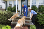 Long Island Jewish Hospital Emergency Department Technician Richard Fernandez receives a beer delivery from Karen and Mark Heuwetter and their two dogs Buddy and Barley on May 03, 2020 in Huntington Village, New York.  Mark and Karen Heuwetter own the Six Harbors Brewery and have trained their two Golden Retrievers Buddy and Barley to help them deliver beer to their customers during the coronavirus COVID-19 pandemic.  The dogs are fitted with a four pack of empty beer cans around their necks and meet customers at their doorstep while Mark and Karen carry the beer to deliver behind them.  It has been comforting for the dogs who are enjoying the exercise and meeting people along the way.  The customers love seeing Buddy and Barley and enjoy petting and greeting them to go with their beer delivery.