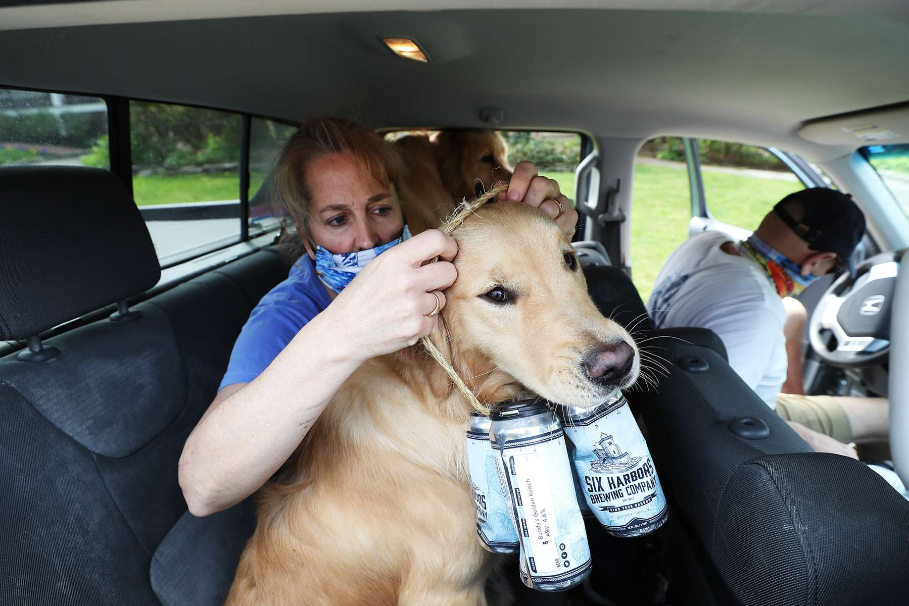 Mark and Karen Heuwetter fit their two dogs Buddy and Barley with an empty four pack of beer cans before a delivery to their customers on May 03, 2020 in Huntington Village, New York.  Mark and Karen Heuwetter own the Six Harbors Brewery and have trained their two Golden Retrievers Buddy and Barley to help them deliver beer to their customers during the coronavirus COVID-19 pandemic.  The dogs are fitted with a four pack of empty beer cans around their necks and meet customers at their doorstep while Mark and Karen carry the beer to deliver behind them.  It has been comforting for the dogs who are enjoying the exercise and meeting people along the way.  The customers love seeing Buddy and Barley and enjoy petting and greeting them to go with their beer delivery.