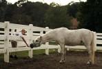 Horse_Days-15