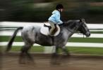 Horse_Days-20