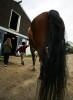 Horse_Days-5