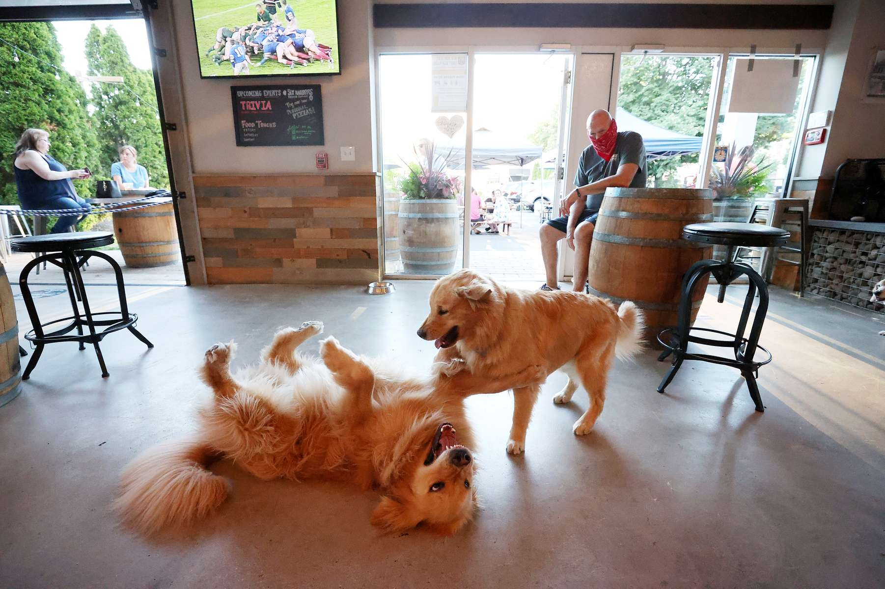 Mark Heuwetter who is the co owner of the Six Harbors Brewery watches his his Golden Retrievers Buddy and Barley play in the bar area as Long Island begins Phase 3 of reopening, allowing restaurants To Seat inside At 50 Percent Capacity and nail salons to open by appointment only on June 24, 2020 in Huntington, New York.
