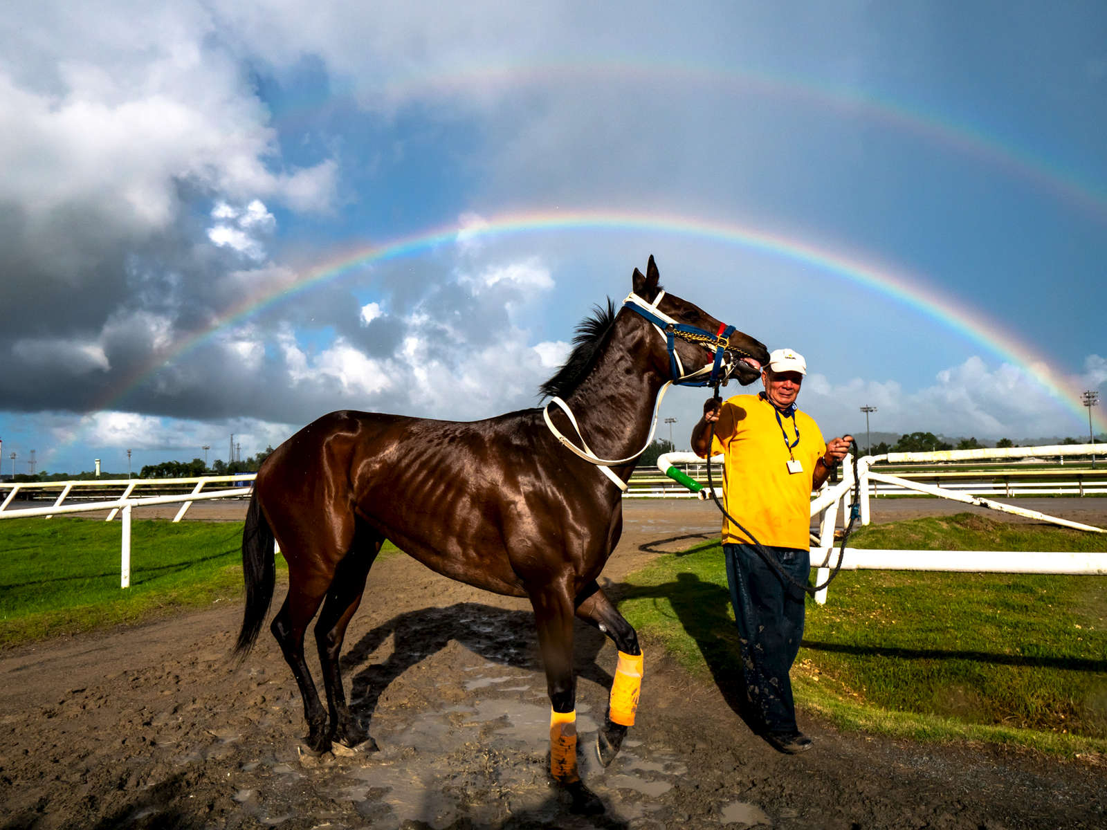 CANOVANAS, PUERTO RICO - NOVEMBER 11:  A horse is led off the track into the stables under a double rainbow at the Hipodromo Camarero on November 11, 2018 in Canovanas, Puerto Rico. The effort continues in Puerto Rico to remain and rebuild more than one year after the Hurricane Maria hit and devastated the island on September 20, 2017. The official number of deaths from the disaster is 2,975.