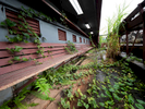 CAGUAS, PUERTO RICO - NOVEMBER 14:  A view of weeds growing in the third base dugout of the Yldefonso Sola Morrales Stadium in Caguas, Puerto Rico on November 14, 2018.  It was of the home of the  Puerto Rican baseball League team the Criollos de Caguas.  The stadium is scheduled to be demolished due to the heavy damage caused by Hurricane Maria. The effort continues in Puerto Rico to remain and rebuild more than one year after the Hurricane Maria hit and devastated the island on September 20, 2017. The official number of deaths from the disaster is 2,975.