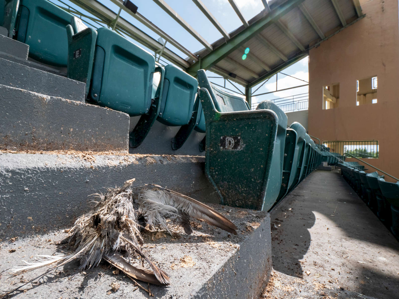 CAROLINA, PUERTO RICO - NOVEMBER 12:   A view of seats with bird droppings and a dead bird at Roberto Clemente Stadium on November 12, 2018 in Carolina, Puerto Rico. The seats remain empty due to the the damage sustained by Hurricane Maria. on November 12, 2018 in Carolina, Puerto Rico. The effort continues in Puerto Rico to remain and rebuild more than one year after the Hurricane Maria hit and devastated the island on September 20, 2017. The official number of deaths from the disaster is 2,975.