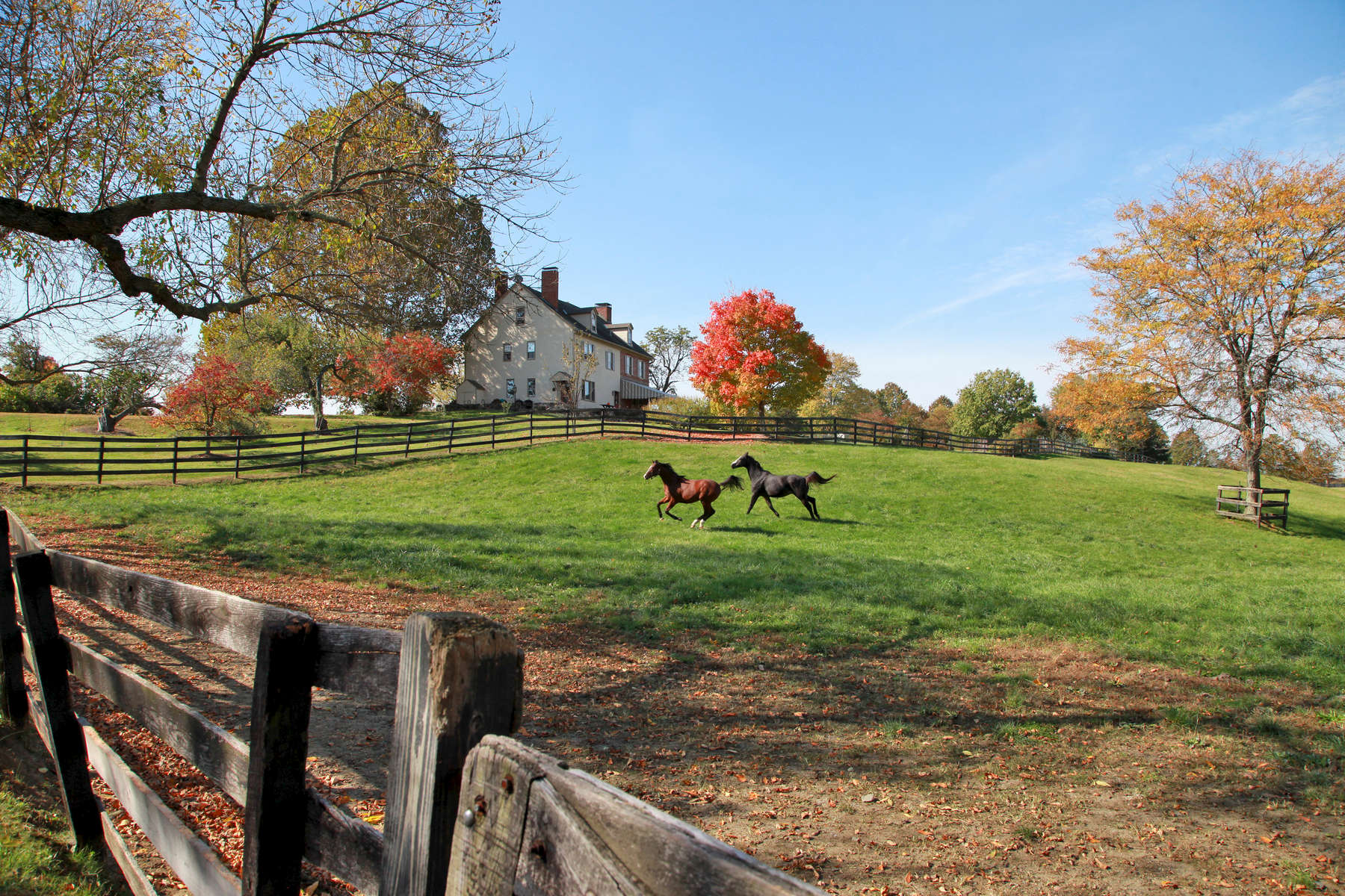 Lefty (L) a colt by Orientate and Cacaway a gelding by St. Everil gallop in front of the main house at Bright View Farm in Chesterfield, New Jersey built in 1736.  Photo By Bill Denver/EQUI-PHOTO.