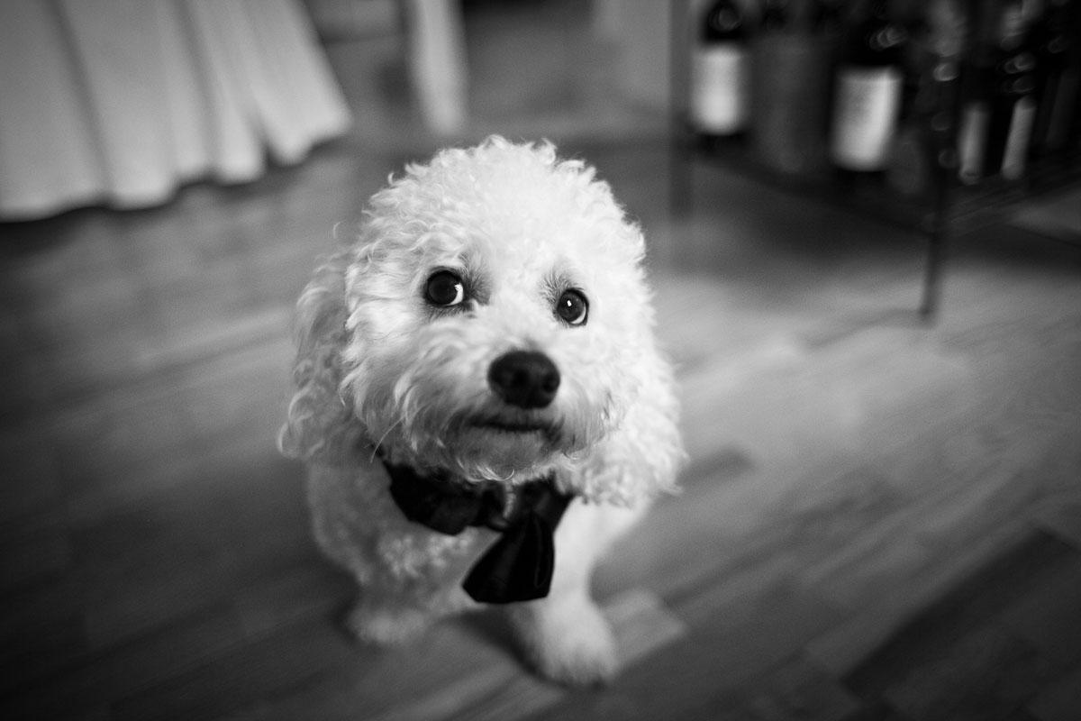 portfolio-portraits-photography-wedding-photographer-burlington-vermont-vt-photojournalism-documentary-wedding-15
