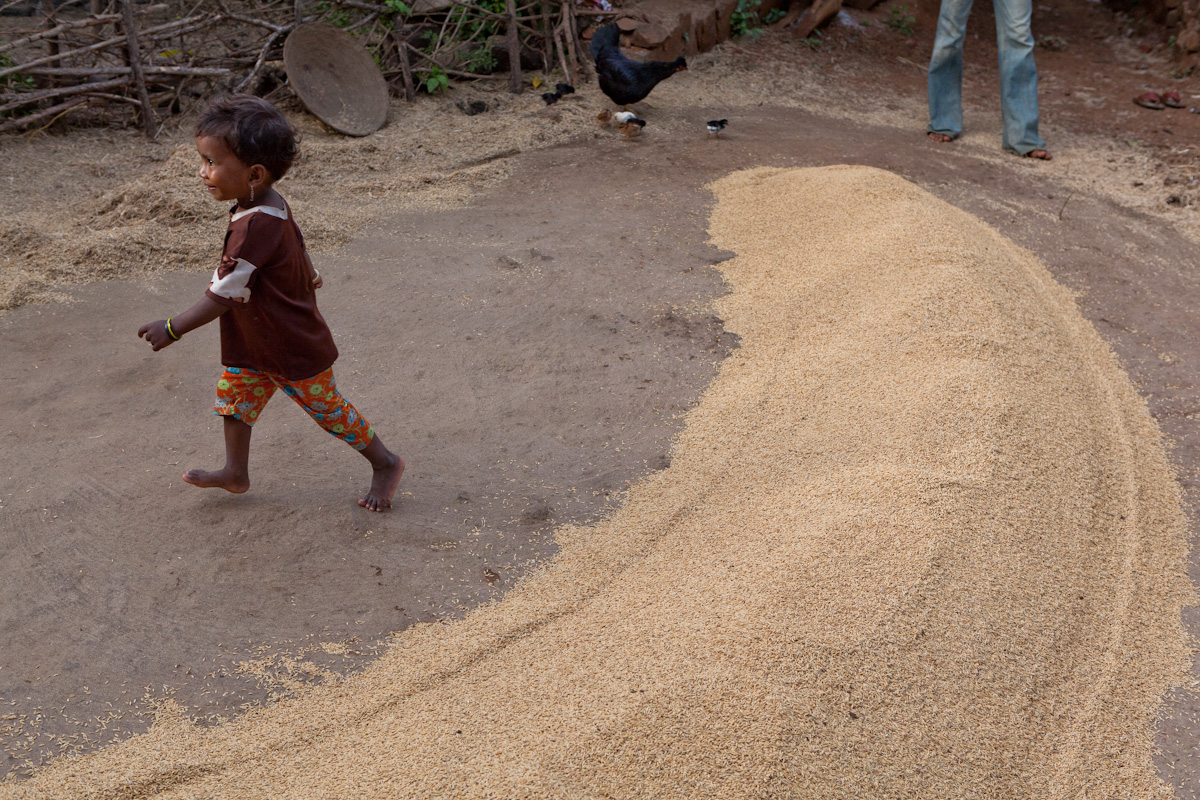 A family harvest has netted enough grain to sell in the marketplace. Many families sell their crop while subsisting on lower nutrient rice or millet.