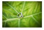 steph_ring