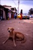 Serakunda_street_dog_-_Version_2