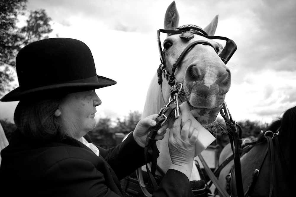 Funeral horse, white horse, funerals, farewells, funeral photography