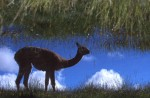 wildlife_1_11A_rarity_reflected2003-03-31