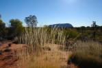 Uluru At Midday