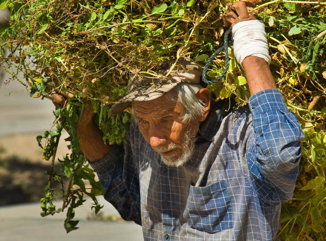 Jardinero La Purisima