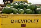 Roadside Melons