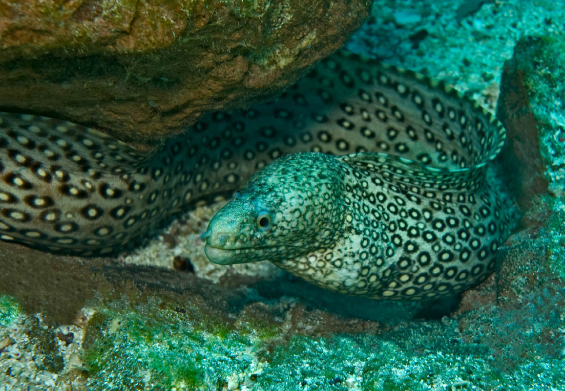 Jewel Moray