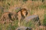 Africa_1999-13
