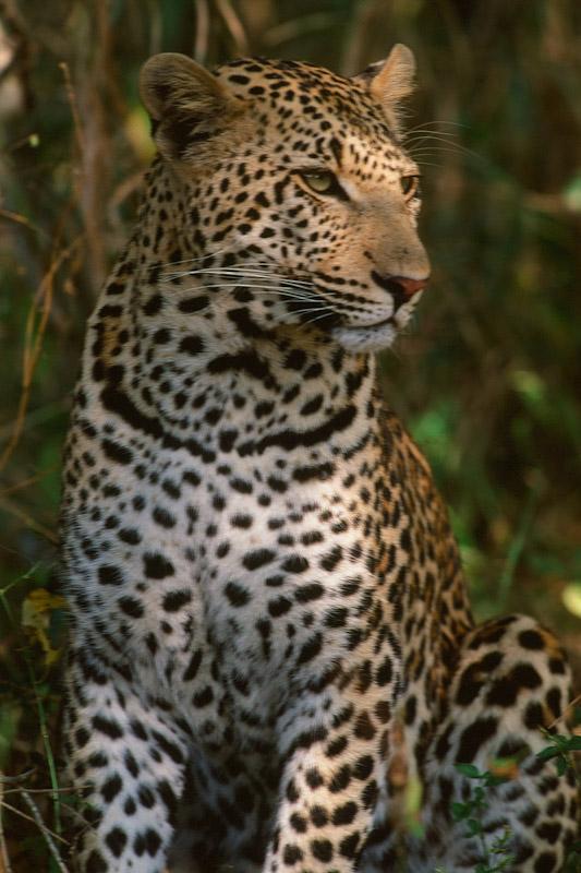 Africa_1999-141