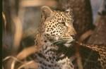 Africa_1999-151