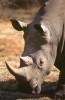 Africa_1999-152