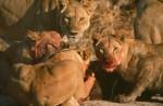Africa_1999-35