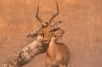 Africa_1999-49