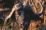 Africa_1999-5