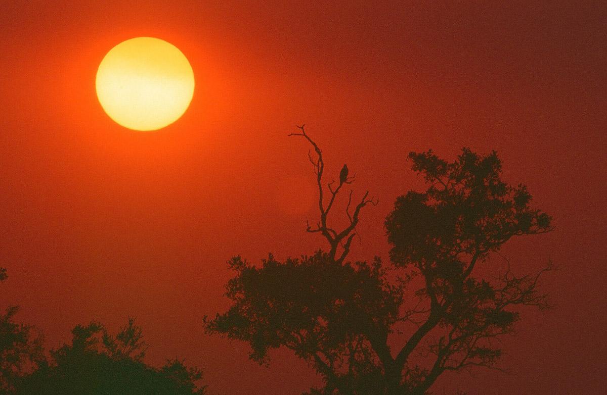 Africa_1999-63