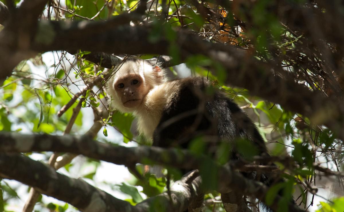 Costa_Rica_2010-3