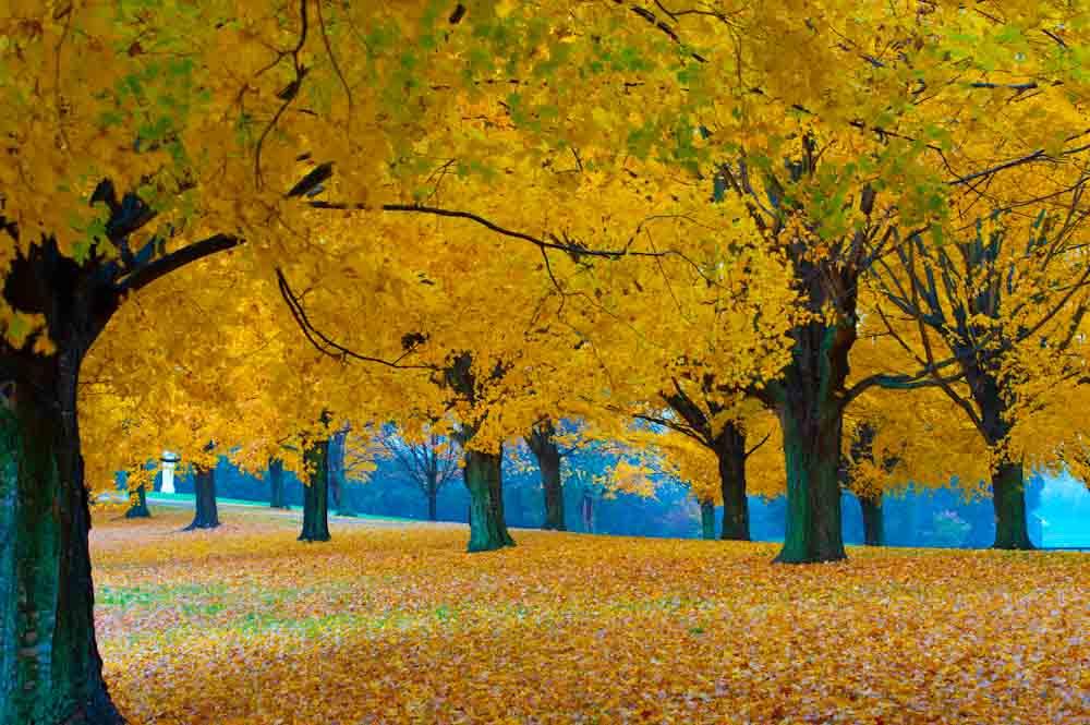 Fall_at_farm