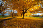 Fall_at_farm-4
