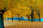 Fall_at_farm