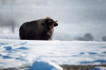 Yellowstone_2010-16-Edit