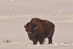 Yellowstone_2010-37