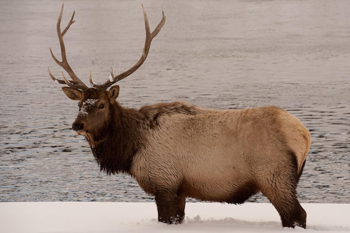 Yellowstone_2010-64