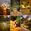 Fall-Chicago-Cantigny-Gardens-Family-Session-012
