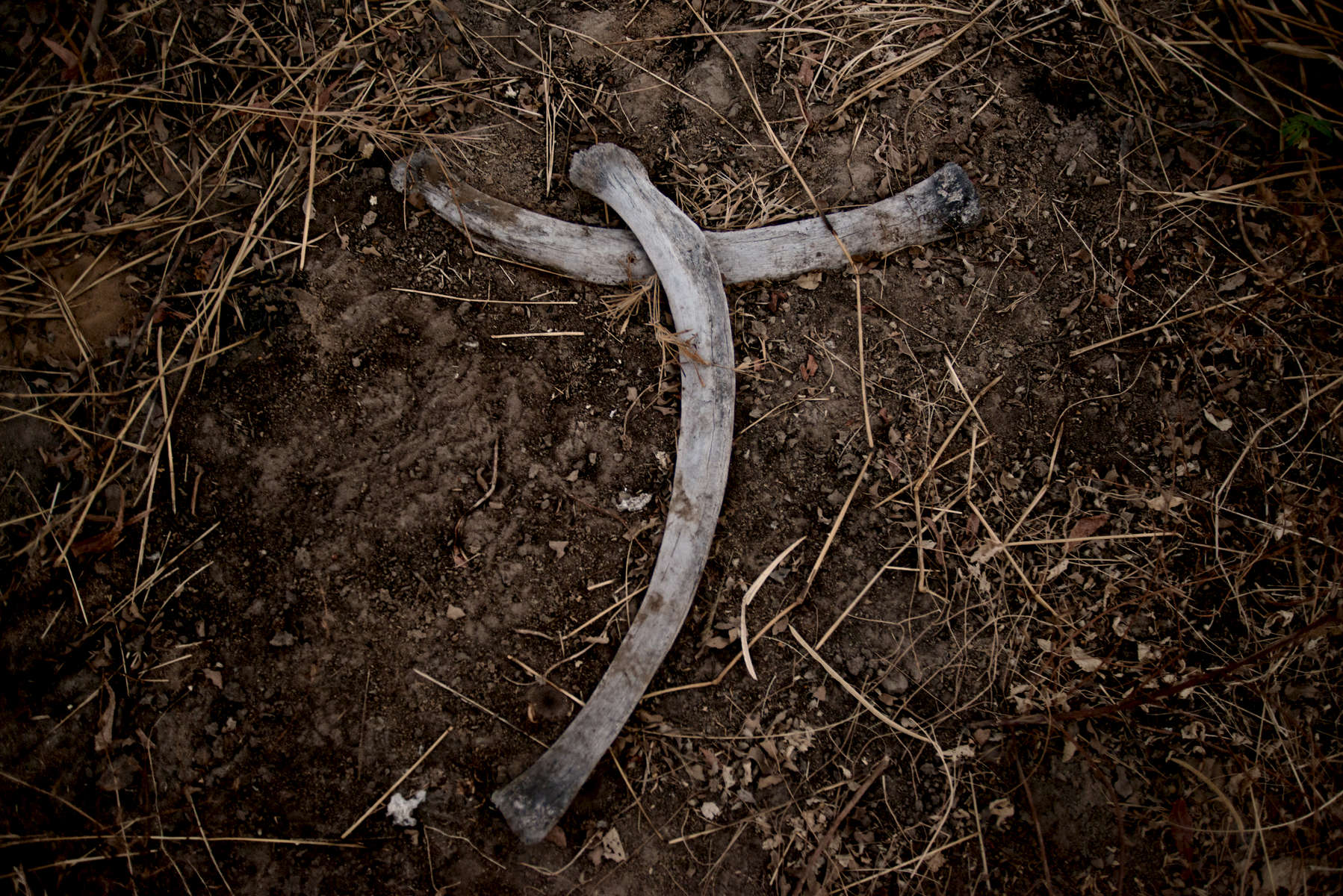 In March 2013 86 elephants, several of whom were pregnant, were reported to have been killed by poachers near Fianga close to the border of Cameroon. Elephant bones are scattered across the massacre.