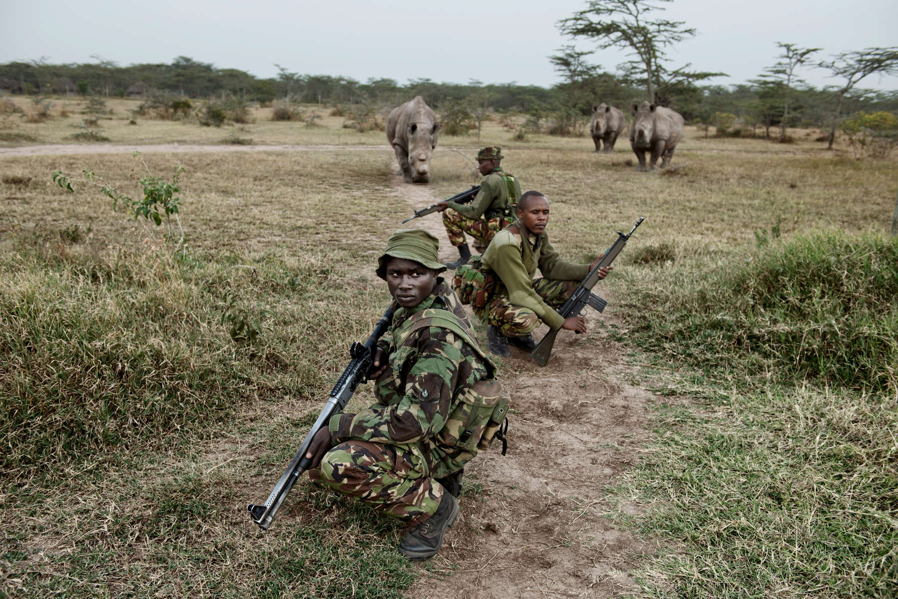 Three of the last seven Northern White rhinos left in the world follow the Kenya Police Reserve who protect them, as they head out on their daily evening patrol.