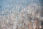 Tasmanian_Fires-_WAZ3834