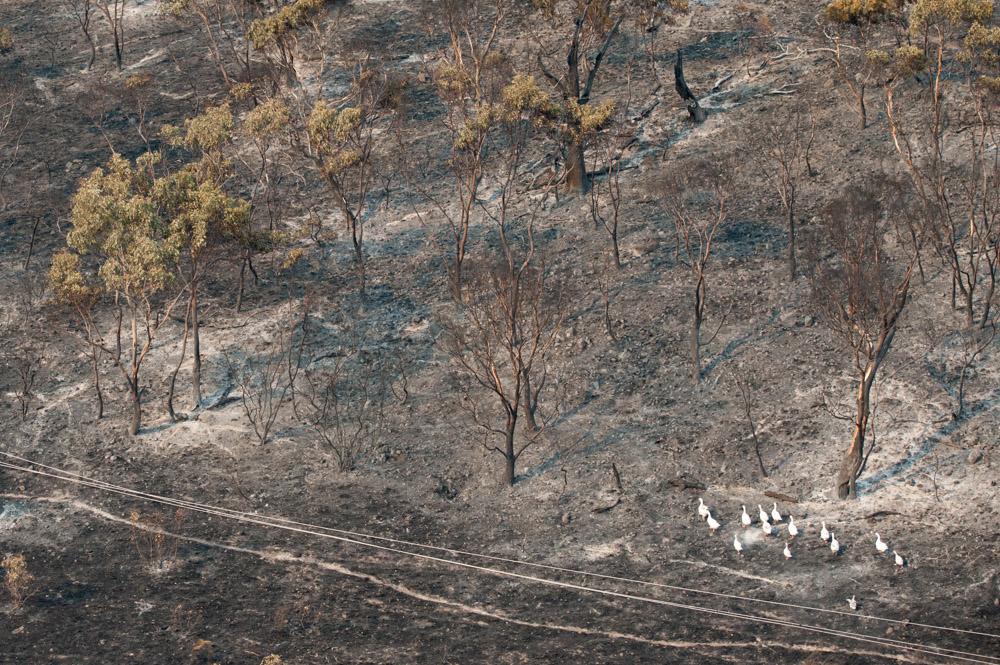 Tasmanian_Fires-_WAZ3935