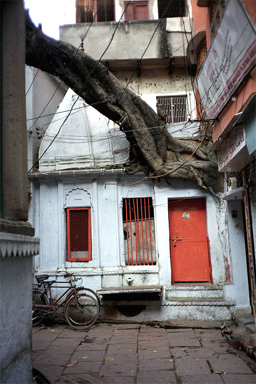 <i>Tree House</i>Varanasi, India, Novermber 2003