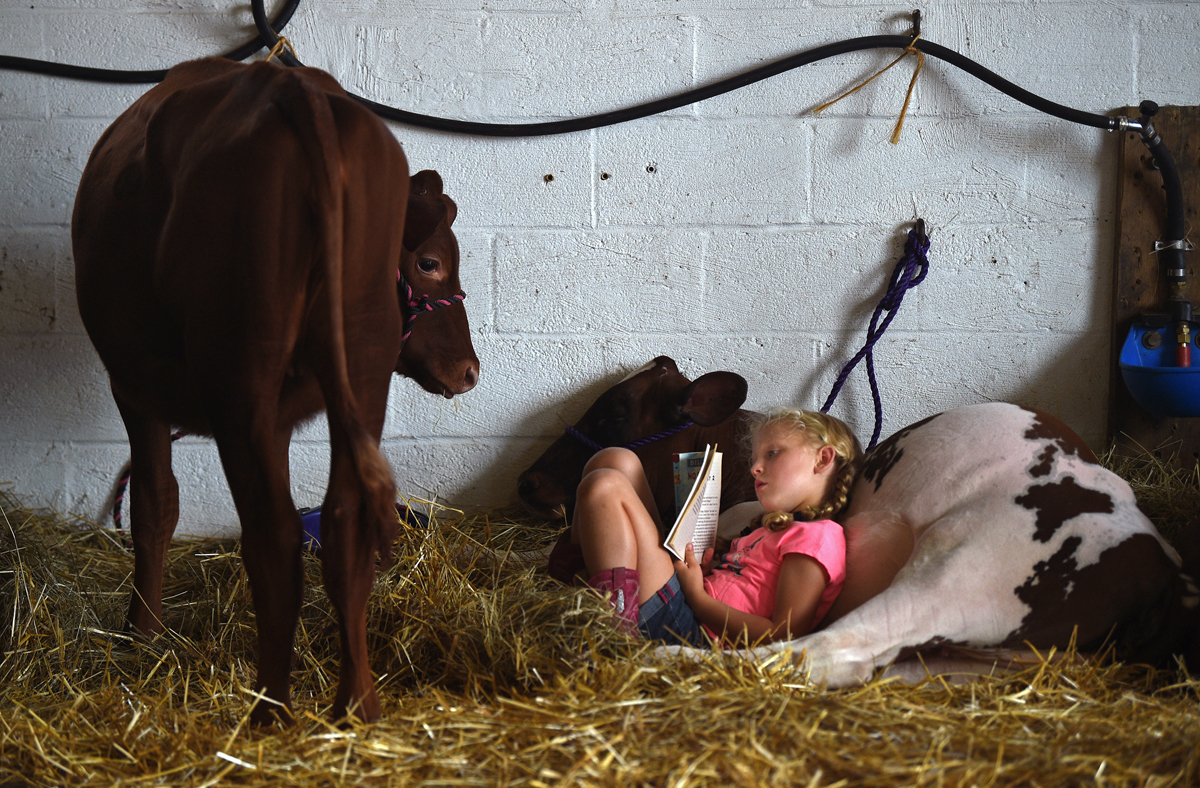Reading in the barn.