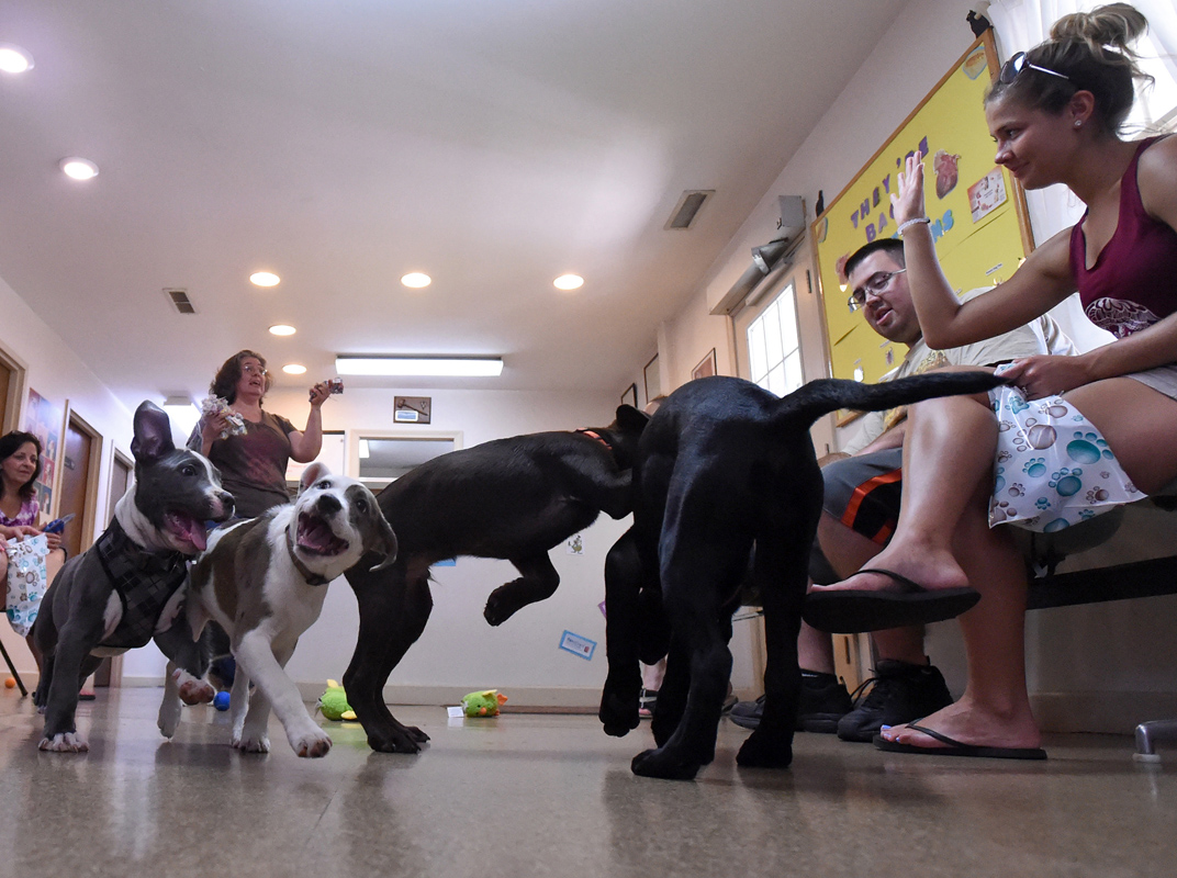 Brooklyn Veterinary Hospital holds a monthly class for new dog owners called {quote}Puppy Kindergarten.{quote} Here the dogs are socialized as veterinary technician and trainer Joyce Kramer, conducts the class.