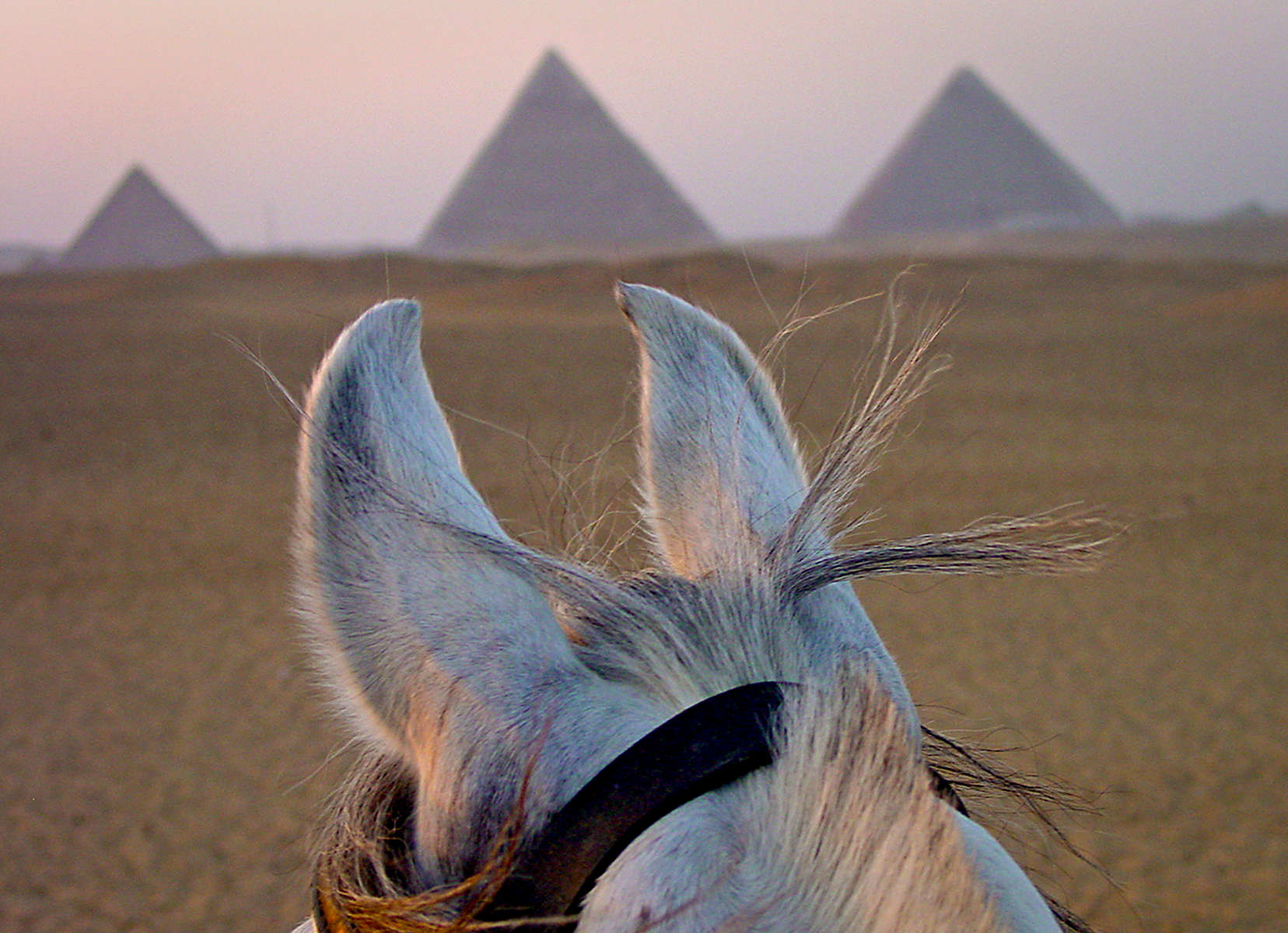 Sunset ride around the Pyramids of Giza.