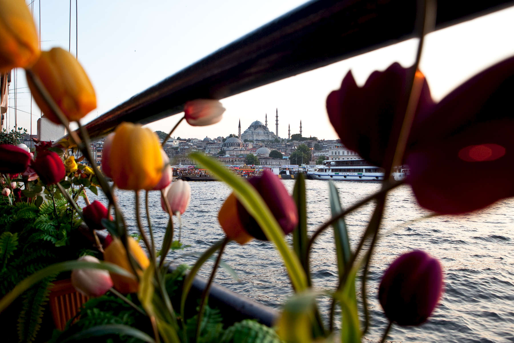 The mosque of Suleiman the Magnificent (completed in 1558) framed by tulips on the Galata Bridge.