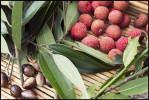 Locally grown produce and spices including lychee and nutmeg in Honolulu.  Image for Hi Luxury Magazine.