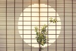 An ikebana flower arrangement sits in front of a  paper screen inside of a traditional Japanese Inn in Noto, Japan.