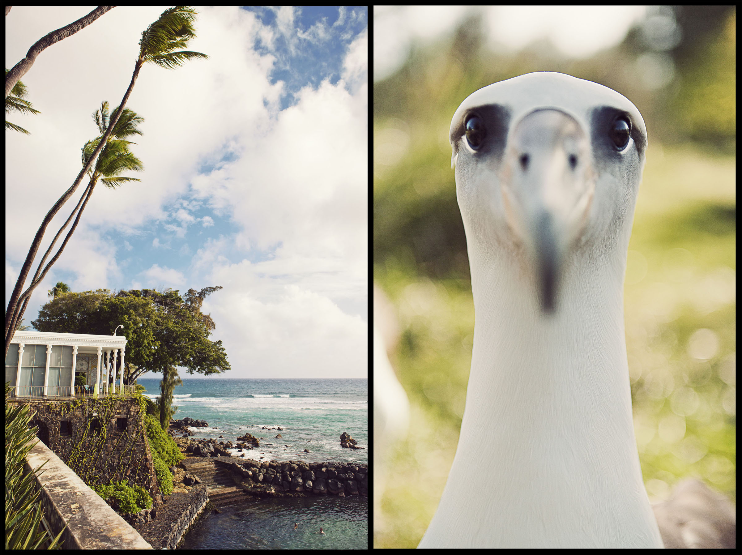 Doris Duke's Shangri La in Honolulu.  An albatross on Midway Island.