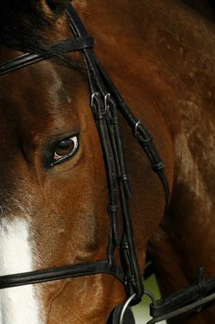 Victor_Fraile_Portfolio_Portfolio_Horse_Photographer_Hong_Kong_78